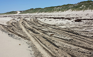 Eden beach 4wd tracks