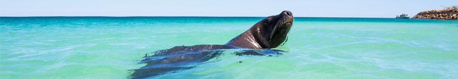 Seal in sea