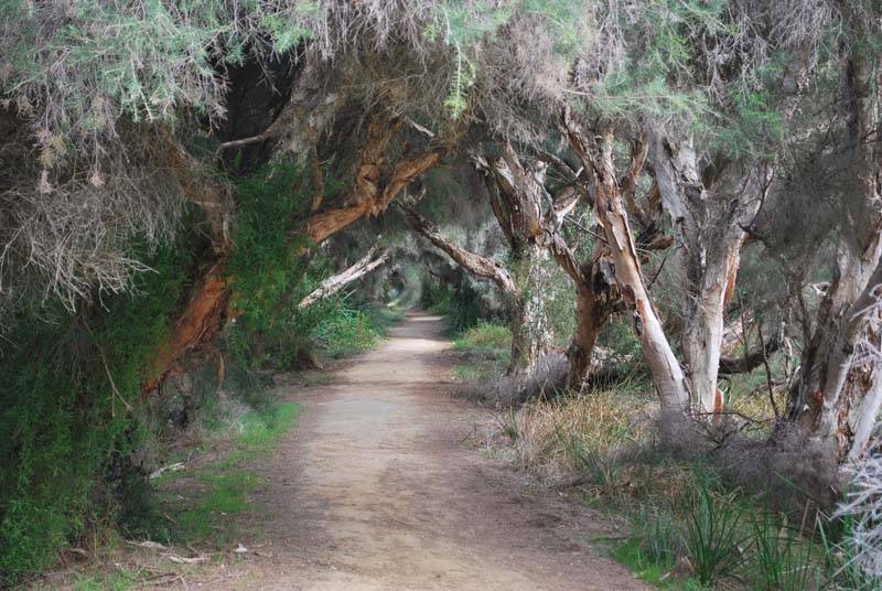 Louise Vocetti - Yanchep National Park