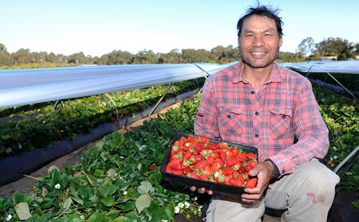 Strawberry farmer with produce