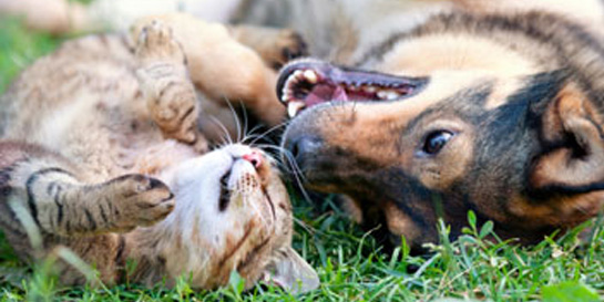 Image of cat and a dog